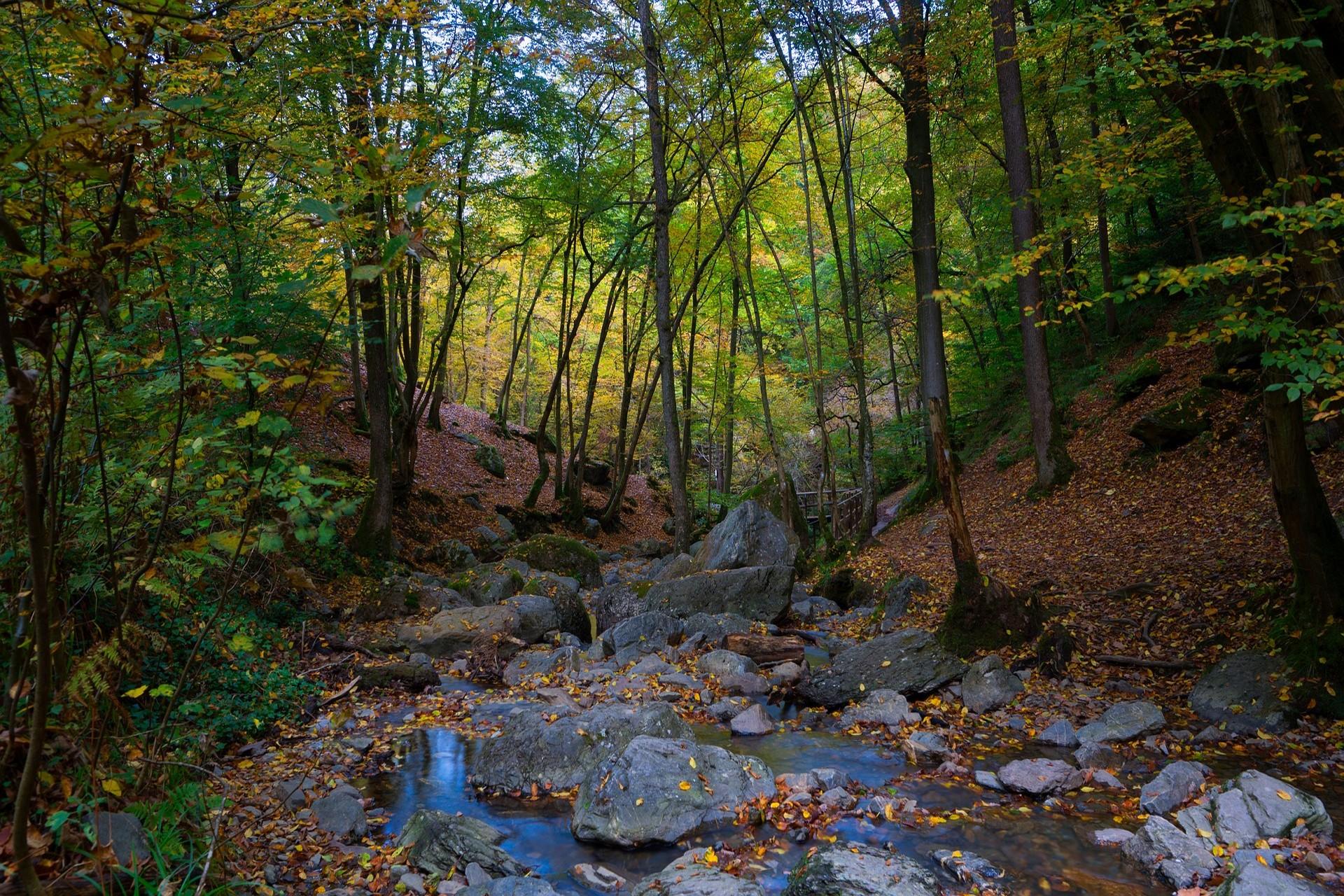 Ontdek de natuur in de Ardennen