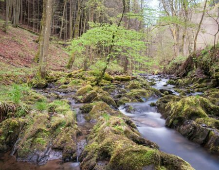 Bach Water Eifel